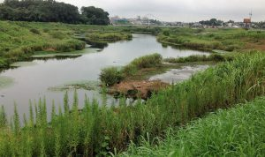 境川遊水地IMG_2504