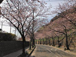 IMG_2886岩戸の桜